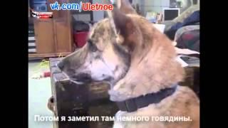 Мужик дразнит собаку (русские субтитры)