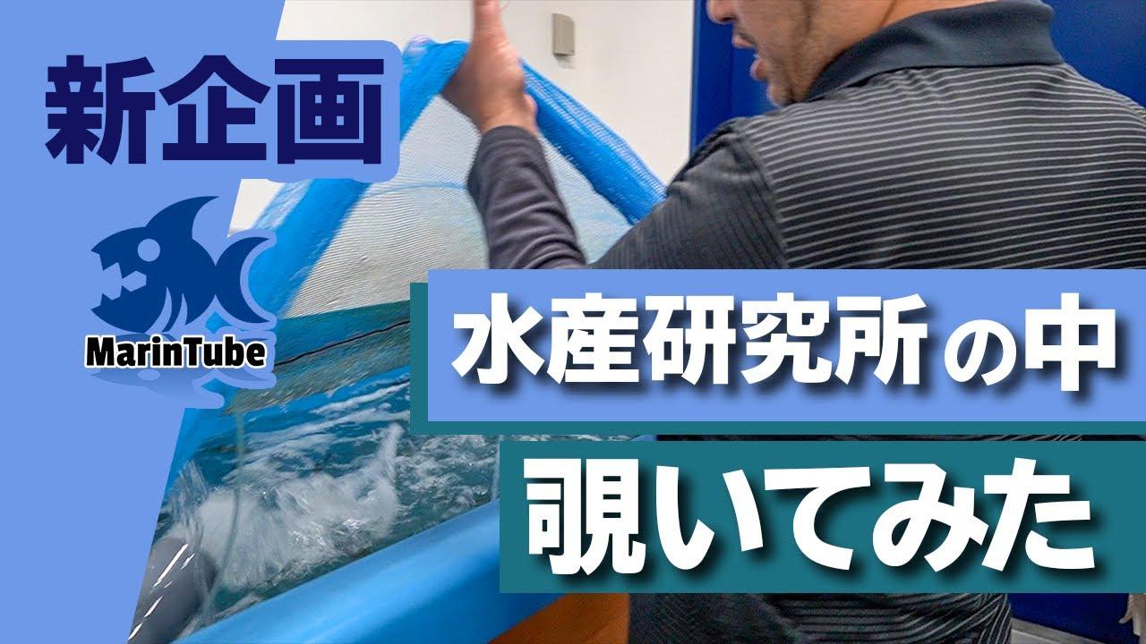 (前編)海の不思議がいっぱい!魚の最先端研究施設に突撃取材!【海洋研究取材#1】