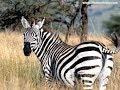 SAFARI TIME ~ Amazing Africa _ Argentina Hunting Adventures!