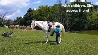 "SOLD ""Ghost of an Angel"" 2007 White Grey Spotted Reg. Tennessee Walking Horse Mare - 14.3h"