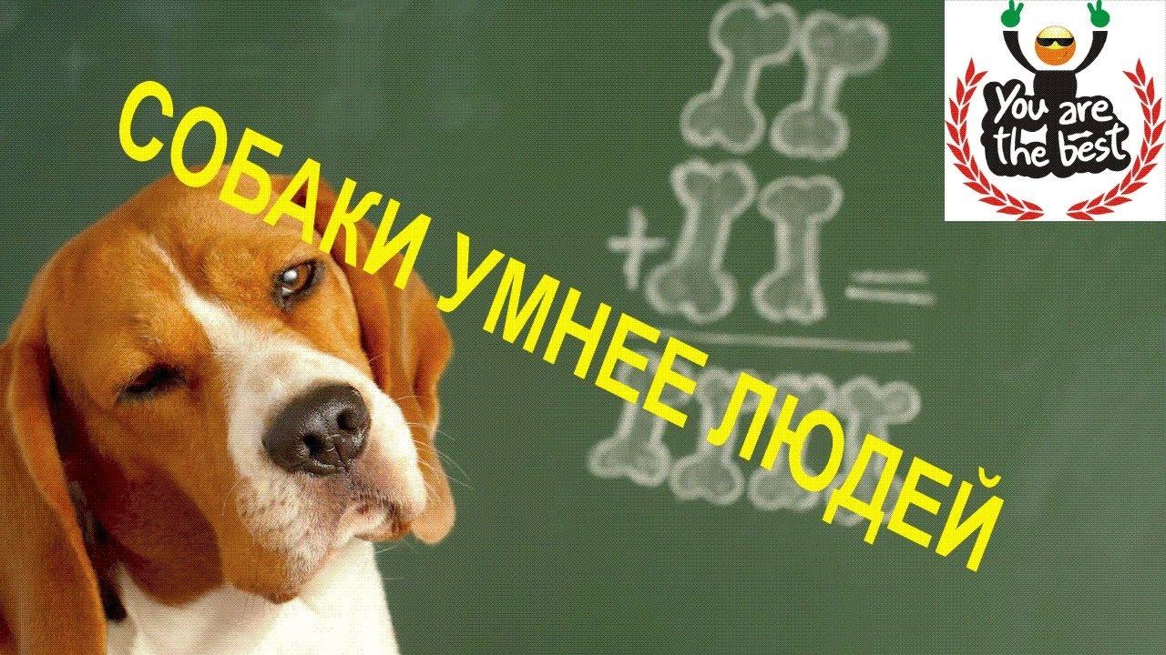 Собаки Умнее Людей Прикол: Иногда Животные Умнее | Учиться в Бинарных Опционах