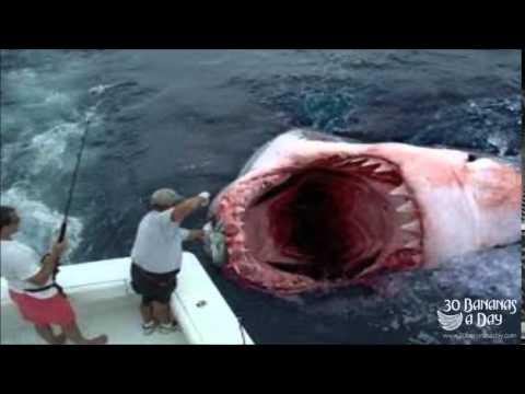 Clearwater Beach Shark Attacks