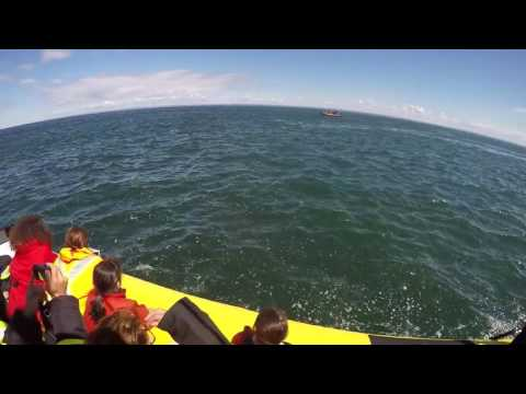A Huge Blue Whale Passes Under The Boat Full Of Tourists For Their Enjoyment