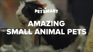 Small Animals As Pets - Petsmart
