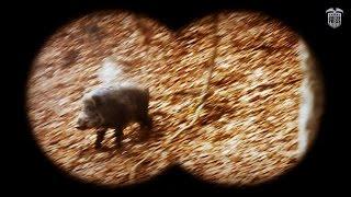 Wild boar hunting in Slovakia - SHOOTINGPRESS