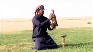 كشتة قنص حباره وصيد دحروج ابو سعد (شاهد وصف الفيديو )