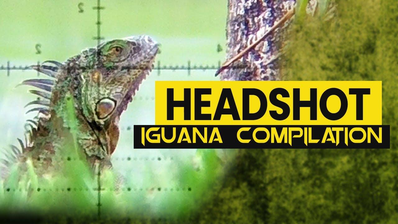 Headshot Iguana Compilation | Orion the Iguana Hunter