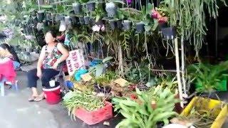 (町散歩)ベトナム市場#4ペット通り