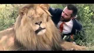 Самые прикольные видео с животными!Футбол с дикими львами.