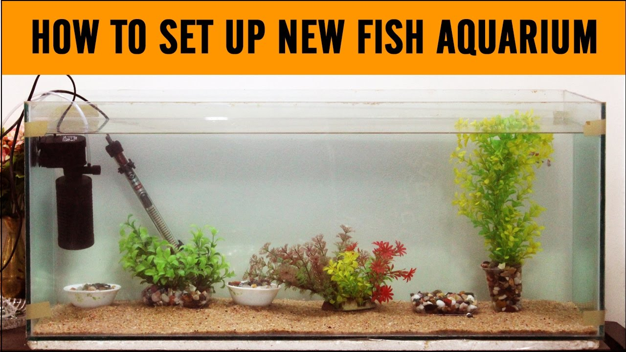 A step by step analysis of how to set up an aquarium