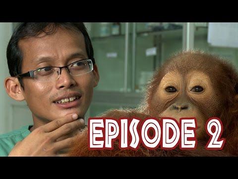 We Love Orangutans - Meet the Vet Agus working at Nyaru Menteng