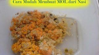 Cara membuat MOL (Mikro Organisme Lokal) dari nasi - Go Green