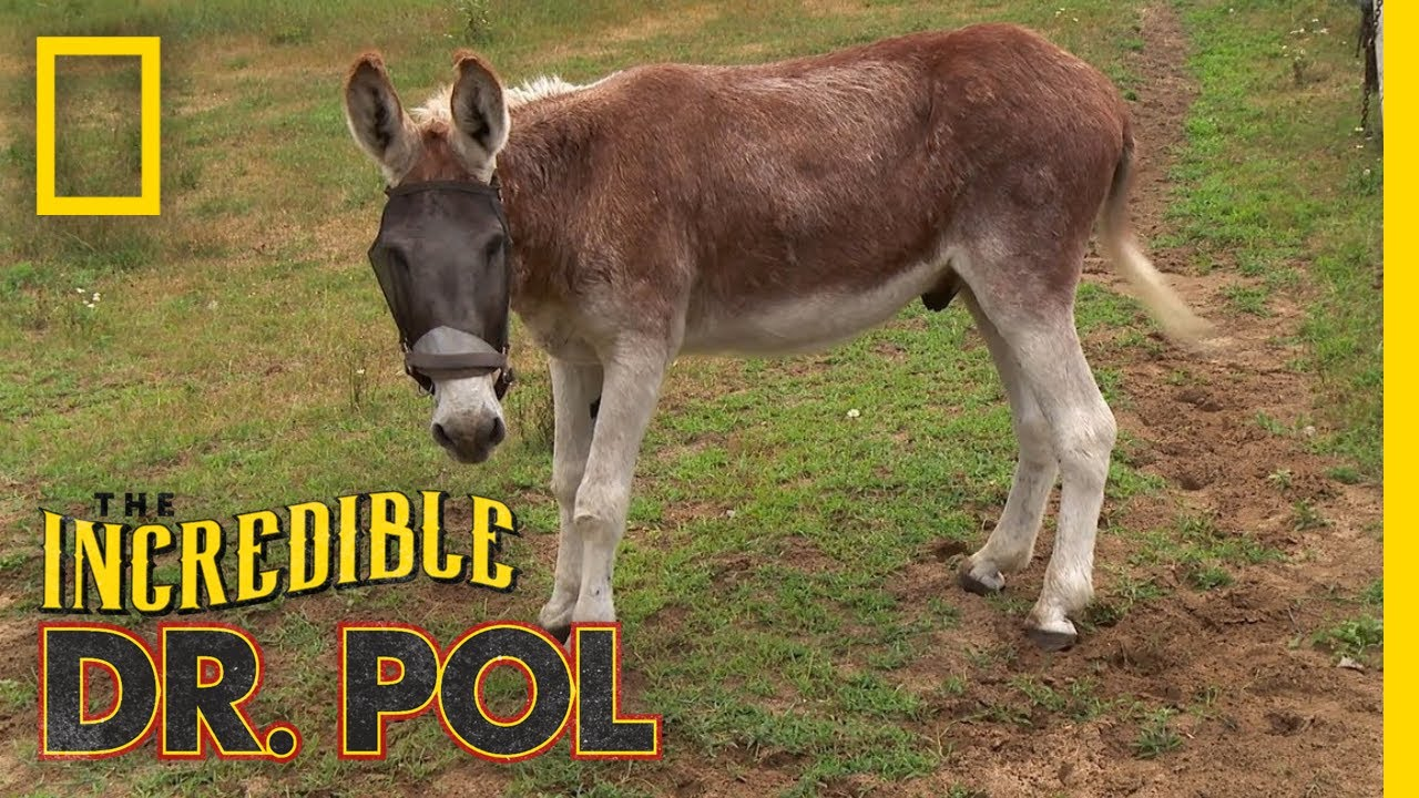 Easy Does It, Donkey! | The Incredible Dr. Pol