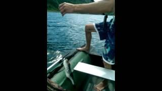 Ядовитая рыба фугу Владивосток,Fugu-fish: risky Japanese delicacy / フグ