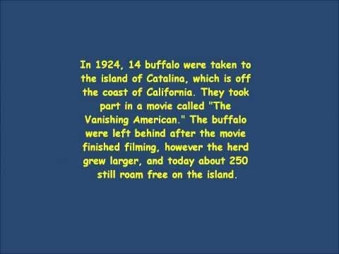 1920s fun facts