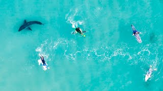 Amazing GREAT WHITE SHARK Drone Footage & Catching Giant Mackerel In My Back Yard - Ep 226