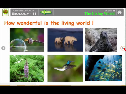 Ch.1 : The Living World (Class 11th Biology # SK Yadav @ Logical Classes Rewari)