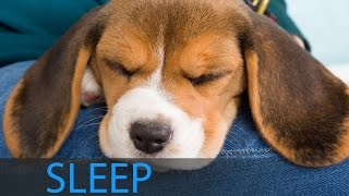 8 Hour Dream Music: Relaxing Deep Sleep Music, ...