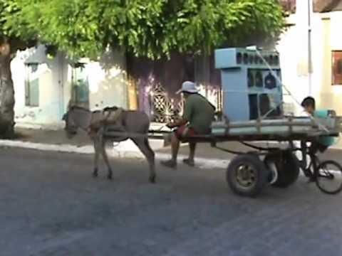 21182 >> Paredão do Jegue - YouTube