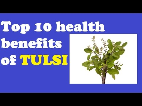 Top 10 Health Benefits of Tulsi | Amazing Benefits of Tulsi Plant | Holy Basil