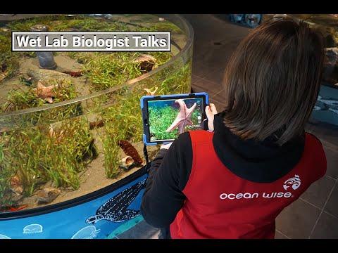 Wet Lab Biologist Talk: Beach Walks 101
