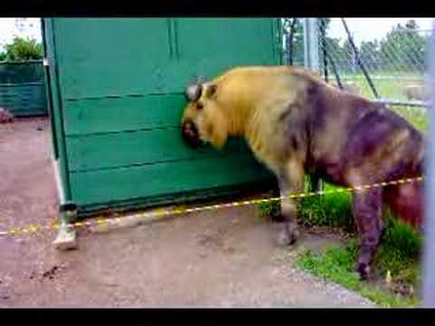 Weird Animals At The Zoo 10