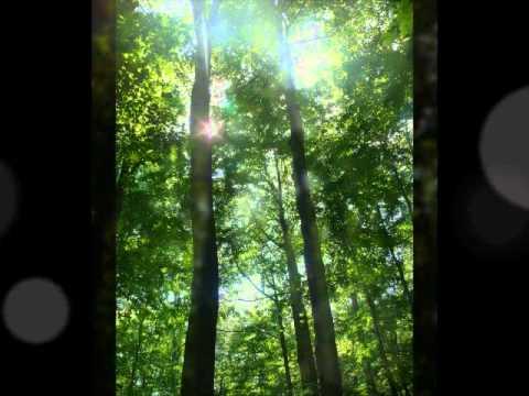 Joseph Smith's First Prayer - beautiful piano arrangement