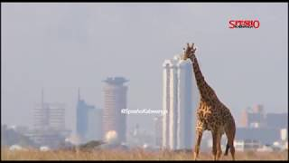 DAR ES SALAAM NO. 14 MAJIJI TAJIRI ZAIDI AFRIKA