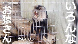『天王寺動物園』大阪市天王寺区 のどの袋を膨らませて大きな声で吠える...