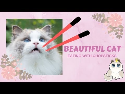Beautiful Cat Eating With Chopsticks | AURORAPURR