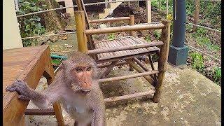 Путешествие в Тайланд. Паттайя и Ко Чанг. Нападение Обезьян! Еда в Тайланде.