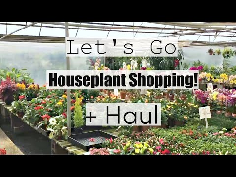 Come Houseplant Shopping With Me! - Houseplant Haul from Favorite Nursery! - 동영상