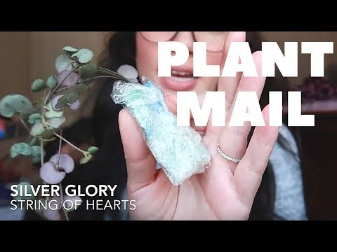Unboxing Plant Mail   Trading Plants