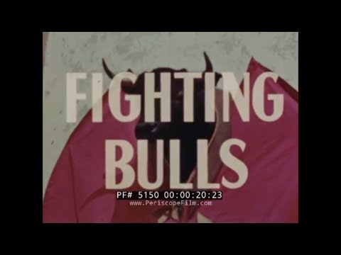 1950s VINTAGE FILM   BULLFIGHT AT PLAZA DE TOROS MEXICO    MEXICO CITY   51504