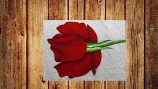 Rosa virada vermelha -Rosa roja filtró- Red rose