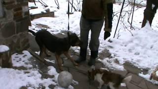 Первый поводок для собаки 📌 🐕
