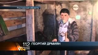 Под Ростовом 5 быков признали виновными в групповом изнасиловании коровы