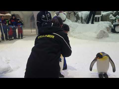 Penguin Encounter| Ski Dubai | Emirates Mall Dubai