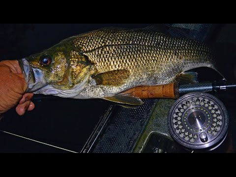 Aussie Bass On Fly — Starlo Gets Reel