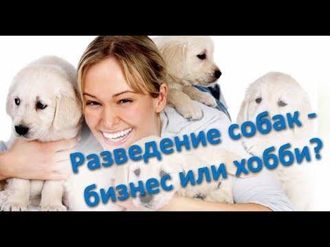Разведение разных пород собак: что нужно знать