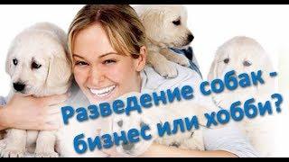 О разведении собак.