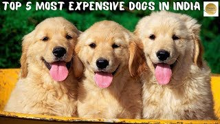 Top 5 Most Expensive Dogs  n  ndia Expensive Dogs Dogs World