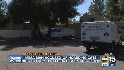 Mesa man accused of hoarding cats