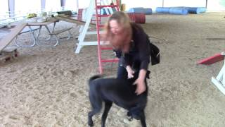 Search Dog Training Clips