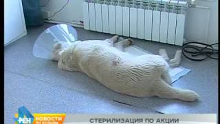 Ряд ветеринарных услуг можно будет получить бесплатно в Иркутске в течение 4 дней