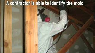 How to Find and Hire a Mold Removal Contractor