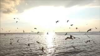 Baixar SHUKRIYA - MUSIC MIDAS