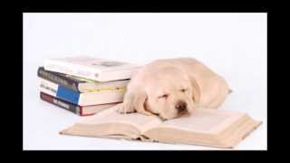 Music for Dogs and Pets: Relaxing Sleeping Music for Dogs, Cats and Other Friends