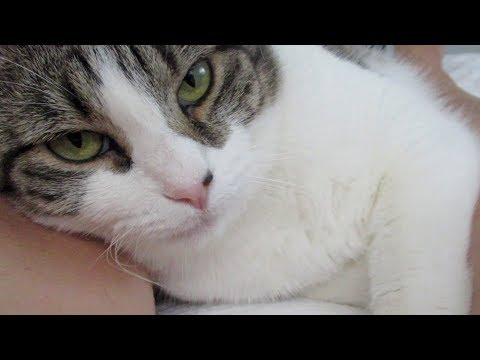Boo Day 74 - One Full Week Inside The House - Training And Socializing A Feral Cat