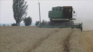 Уборка 2018.  Канадская трансгенная пшеница Толедо